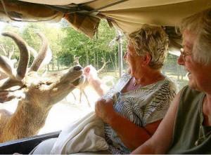 safariwildgehege